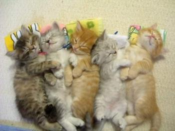http://akhmadguntar.com/wp-content/uploads/2009/01/kucing-ampuh-pereda-stress.jpg